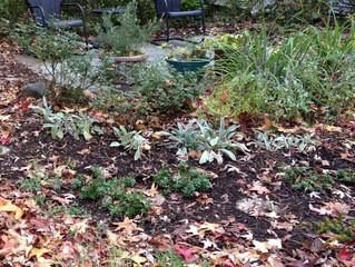 Delaying Your Spring Cleanup to Promote Pollinator Friendly Habitats