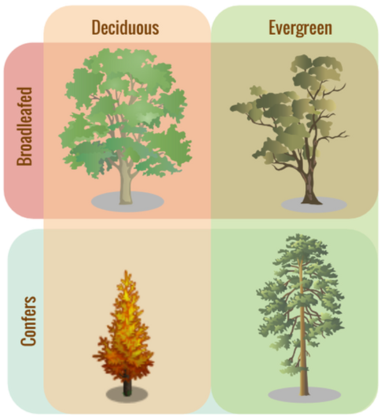 Tree-classifications