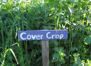 Turtle Talks Podcast – Episode 6: Covering Your Soil