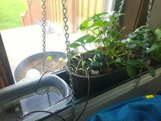 Indoor Gardening Ideas – Update