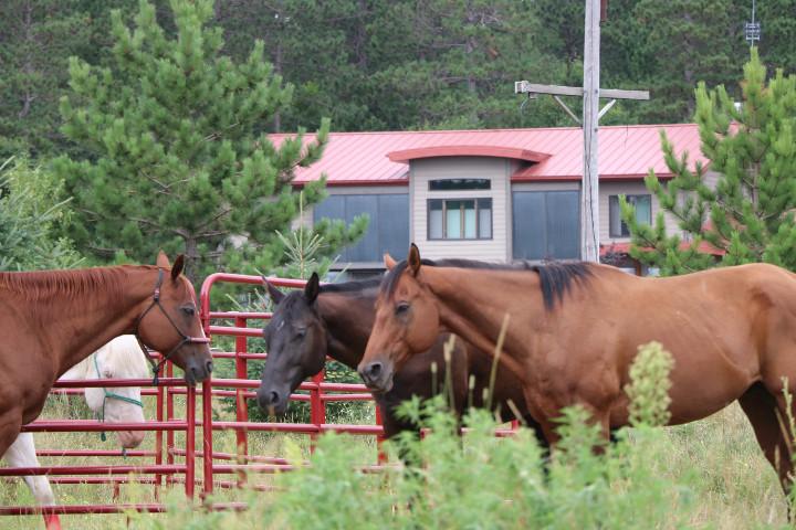 horsearc