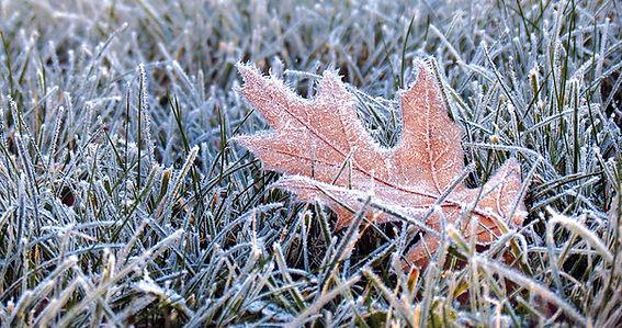 firstfrost.jpg