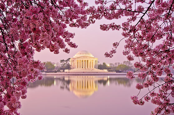 Dawn at the Jefferson Memorial during th