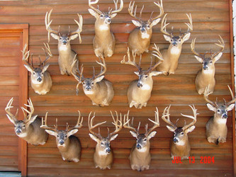 Daniel Bell Taxidermist Kansas
