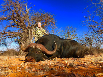 Hunting Cape Buffalo Limpopo South Afric