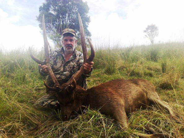 Rusa Deer Hunting In Queensland