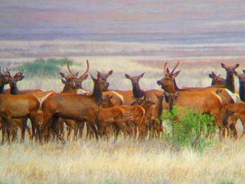 San Carlos Apache Tribe Recreation & Wildlife