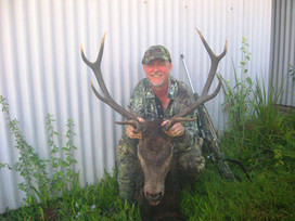 Deer Hunting & Guiding Service In South East Queensland