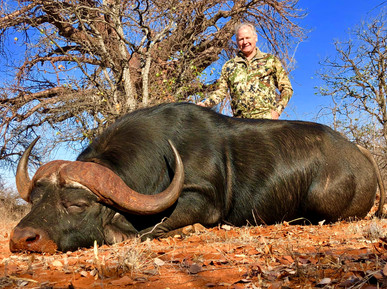 Dangerous Big Game Hunting South Africa Cape Buffalo