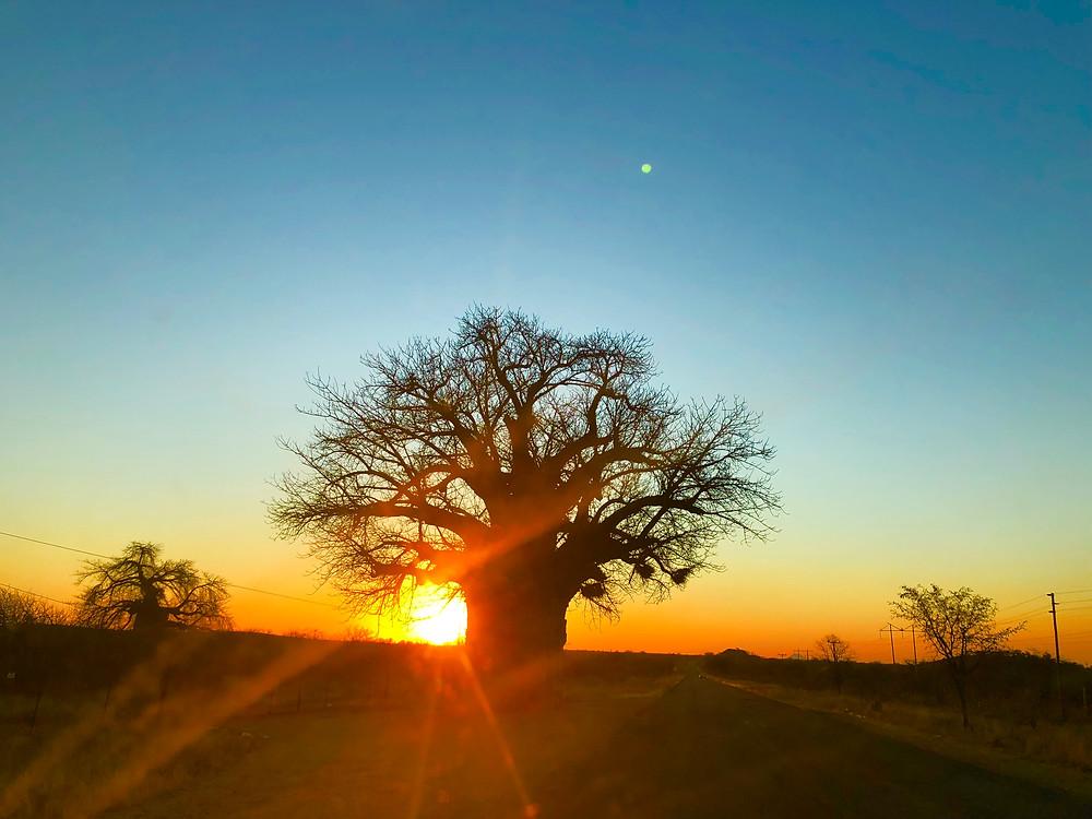Stunning Scenery - Limpopo Sunset