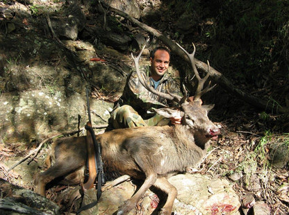 What A Hunt! Red Deer Hunting In Australia