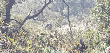 Dangerous Game Hunting On Royal Karoo Safaris