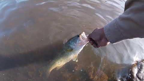 San Carlos Fishing