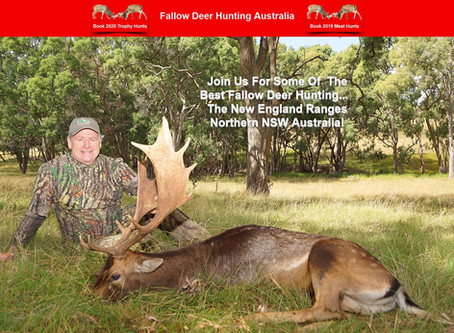 2020 Rut With Fallow Deer Hunting Australia