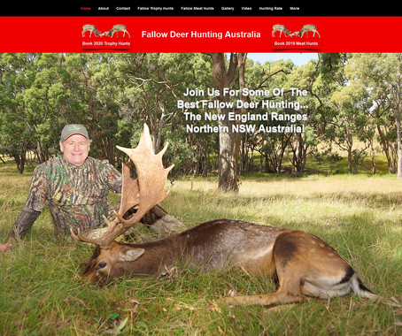 2020 Rut With Fallow Deer Hunting Australia