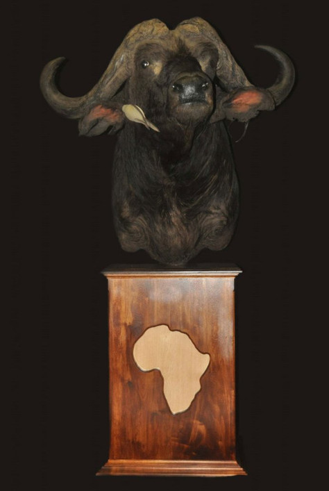 Field & Stream Taxidermy South Africa In Partnership With Hunting Limpopo South Africa...