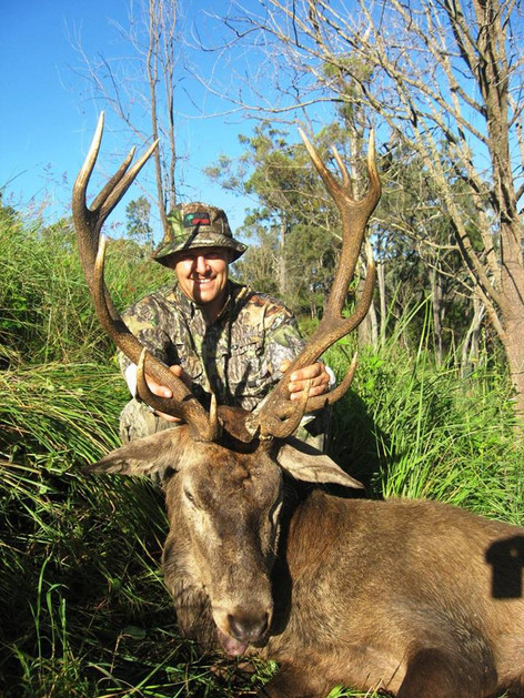 Queensland Red Stag Hunting Australia