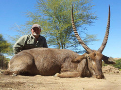 Waterbuck Large Plains Game Hunting Limpopo South Africa
