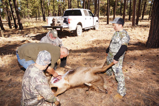 Youth Big Game Hunting Arizona Youth Cow Elk