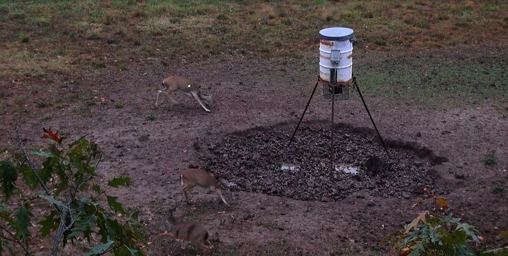 Hunting Texas Deer With www.texasboarsnbucks.com