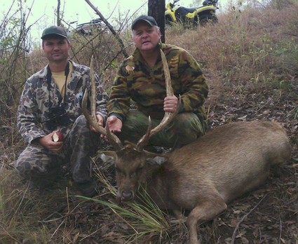 Rusa Deer Hunting Queensland Australia