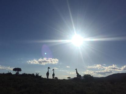 Beautiful African Safari Scenery On The Eastern Cape