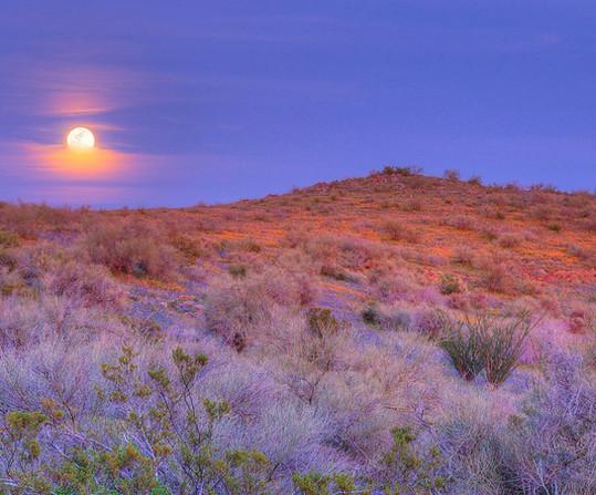 San Carlos Apache Tribe Rec & Wildlife M