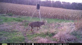 Big Kansas Whitetail Bucks