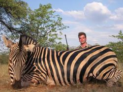 Zebra Large Plains Game Safari