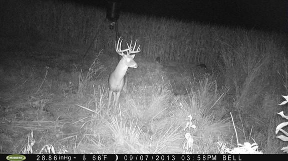 Affordable Trophy Whitetail Hunts Kansas