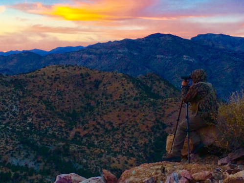 Glassing New Mexico For Coues Deer