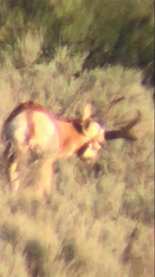 Trophy Speed Goat New Mexico AussieJohn