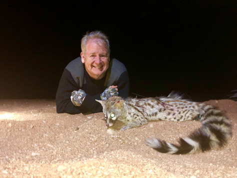 Night Hunt For Genet In Limpopo...