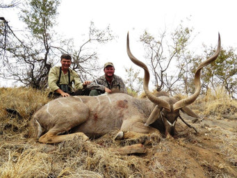 Kudu Hunting Packages Book With Downunder Taxidermy Studio & Guiding Services