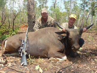 Banteng Hunting Australia With Guide Markus Michalowitz