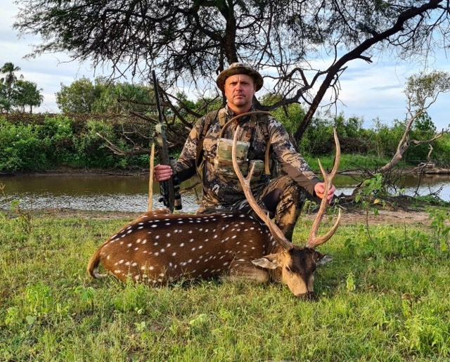 Chital Deer Hunting Safaris In Queensland