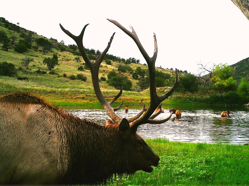 San Carlos Apache Recreation Wildlife Website www.sancarlosrecreationwildlife.com