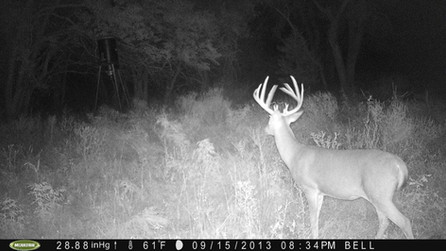 Hunting Kansas Trophy Whitetail