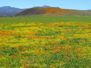 Beautiful San Carlos Apache Tribe Land