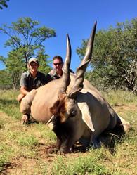 Eland Bull Hunt Royal Karoo Safaris Eastern Cape
