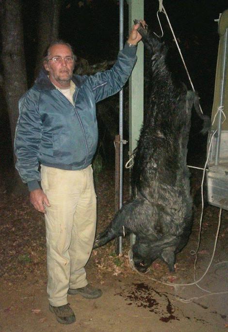Wild Hog Hunting In Australia