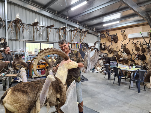 Taxidermist Markus Michalowitz Studio Queensland Australia
