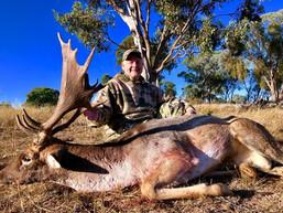 2018 Fallow Deer Rut April NSW Australia