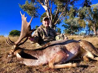Fallow Deer Rut Australia