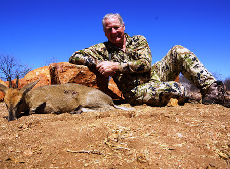 Duiker Hunting In Limpopo