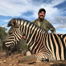 Zebra Safari At Royal Karoo Eastern Cape South Africa