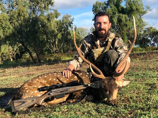 Chital Deer Safaris In North Queensland