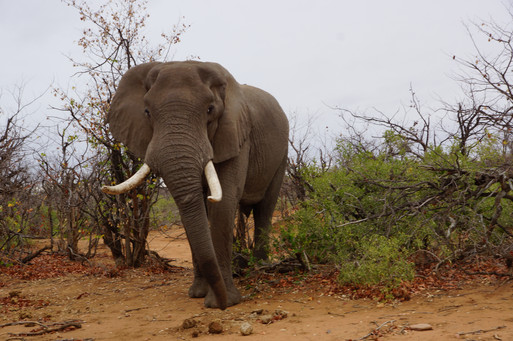 South Africa Big Game Safaris