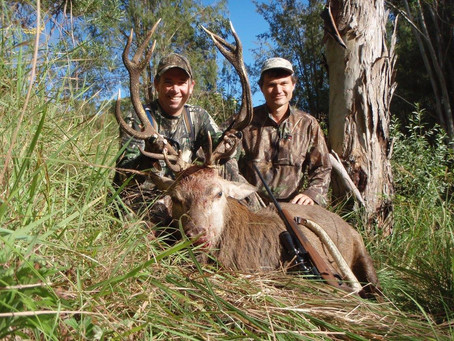 Red Stag Hunting In Queensland Australia