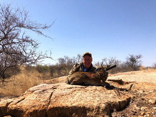 Klipspringer Hunting In Limpopo